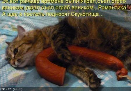 Свежаие котоматрицы от 21.08.11